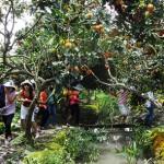 Fruit gardens in Mekong Delta