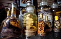 Snake Wine in Vietnam