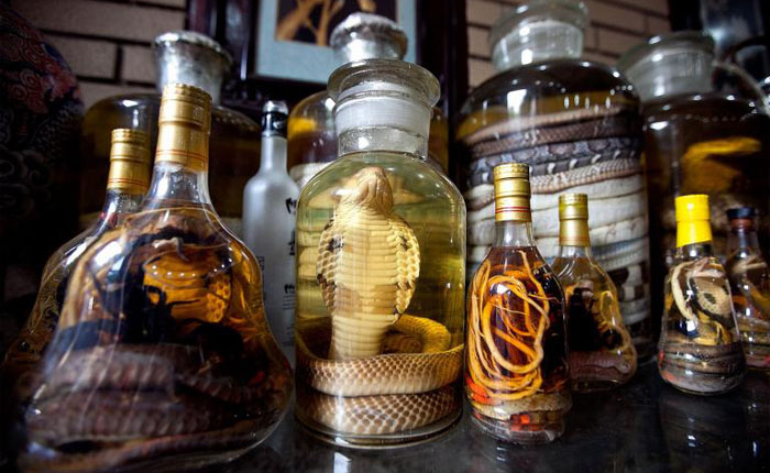 Snake Wine in Vietnam