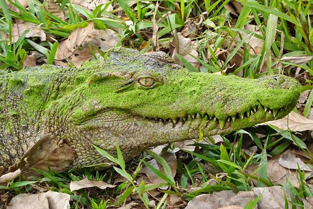 Crocodile lake station nam cat tien national park tours