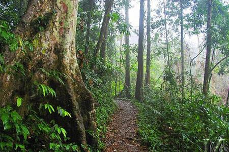 Cuc-Phuong-National-Park-Tour-001