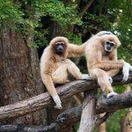Wild Animals in Nam Cat Tien National Park