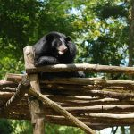 animals at nam cat tien national park tours