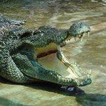 crocodile nam cat tien national park tours