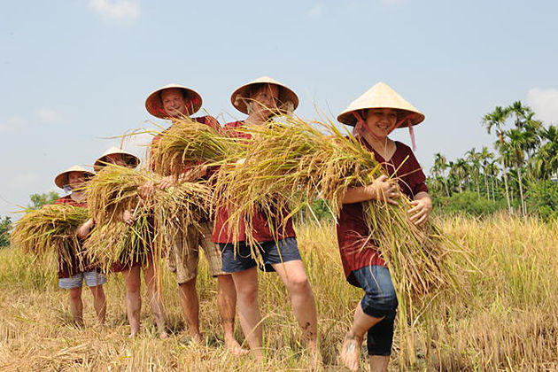 Rice Show in Hoi An Tour – Half Day