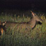night animal watching nam cat tien national park tours