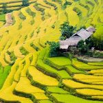 rice terrace vietnam and cambodia tour 21 days