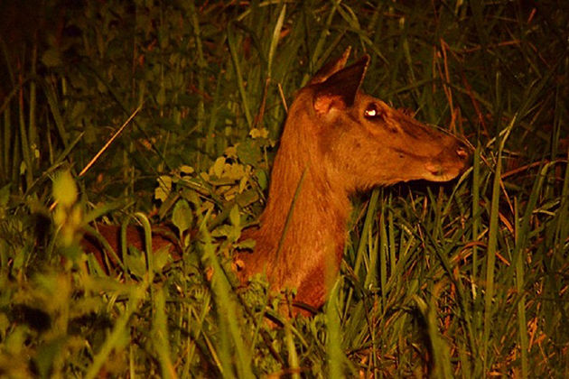 watch animal at night in nam cat tien national park tours