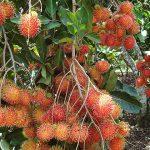 mekong delta lush orchard laos vietnam tour