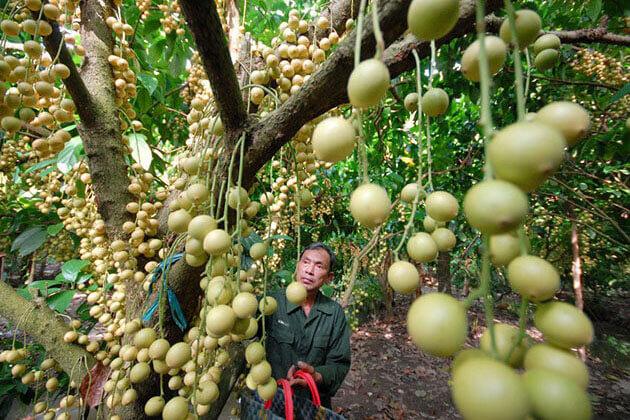 Cu Chi Tunnels Trung An Fruit Garden