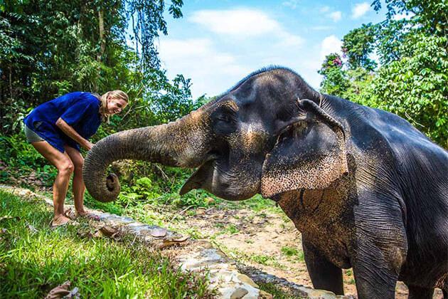 Elephant Feeding in Laos Tour