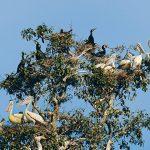 Prek Toral Bird Sanctuary Cambodia Tour