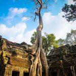 Ta Prohm Temple in Siem Reap Cambodia Tour